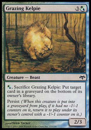 Grazing Kelpie